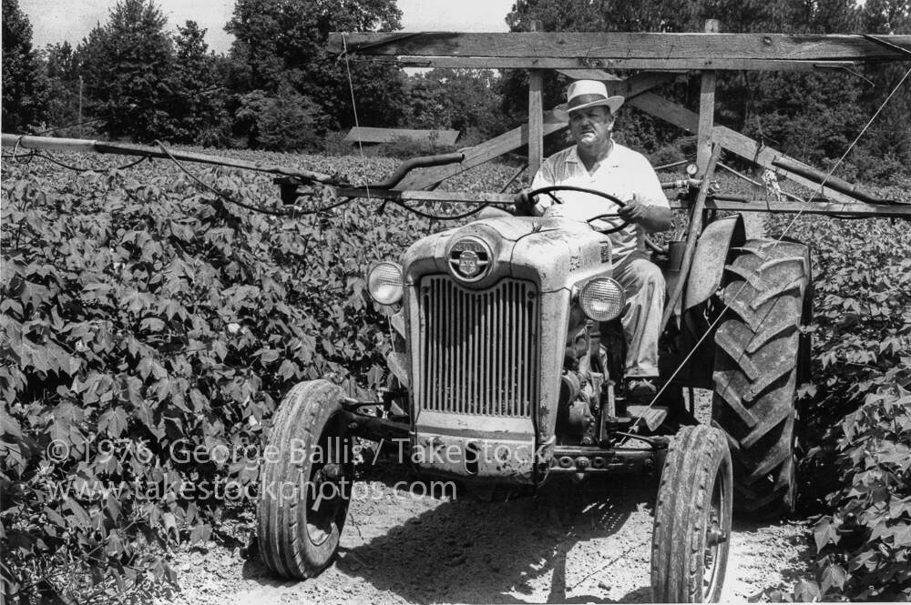 Vernon Dahmer in his cotton fields outside of Hattiesburg, Mississippi, November 3, 1964, George Ballis, Take Stock